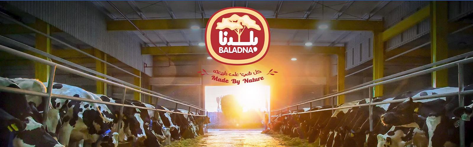 Holstein-Rinder in Katar - Baladna-Farm in der Nähe von Al Khor