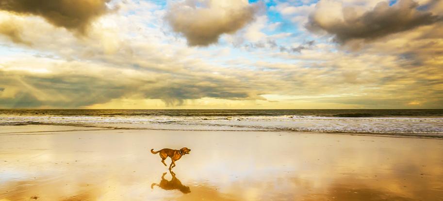 Mit Hund in Katar - Mit Hund am Strand (Wakrah Beach)